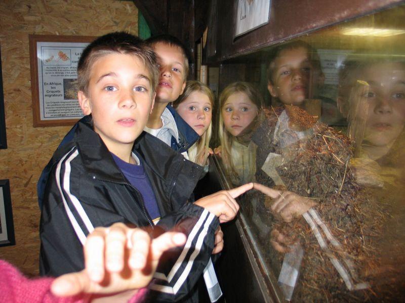 enfants-dans-le-musee