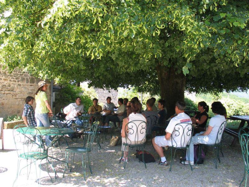 2323286-terrasse-cafe---public